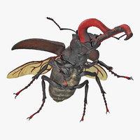 3D lucanus cervus stag beetle