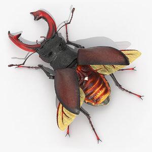 lucanus cervus stag beetle 3D model
