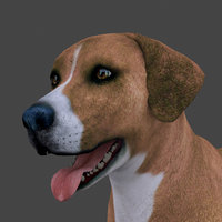 3D model rigged male dog