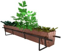 copper herb food plants 3D model