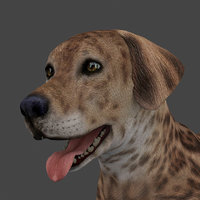 rigged male dog 3D