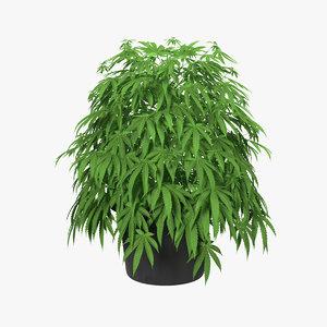 3D marijuana plant pot
