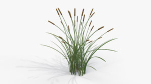 3D feather grass reed 002 model