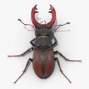 3D lucanus cervus stag beetle model
