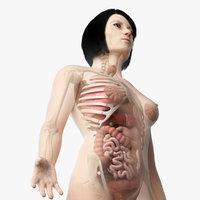 3D skin asian female skeleton
