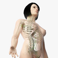 Asian Female Skin, Skeleton And Lymphatic System Rigged