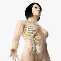 skin asian female skeleton 3D model