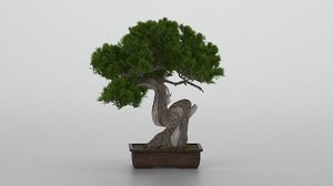 pine bonsai tree model