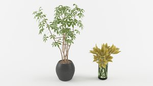 3D lilly pachira aquatica pots model