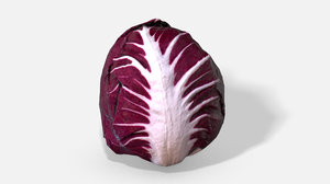 3D vegetable red chicory -
