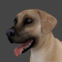 rigged male dog model