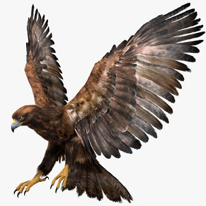 realistic golden eagle rigged 3D model