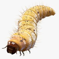 Maggot (Fur) (Rigged)