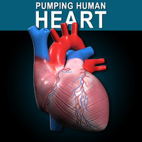 Human Pumping Heart