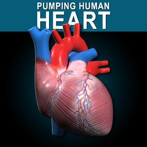 human heart pumping 3d model