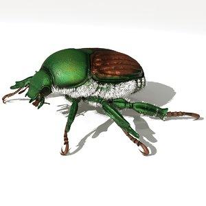 3D bug japanese beetle