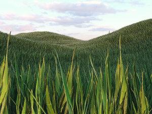 3D grass 1