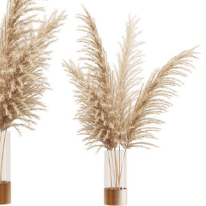 dried flower pampas grass 3D