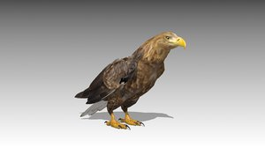 white-tailed eagle 3D model