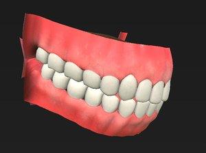 oral cavity 3D model