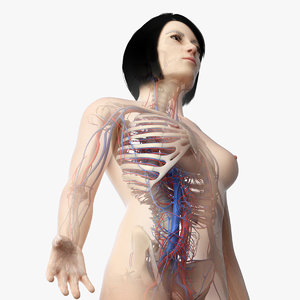 3D skin asian female skeleton model