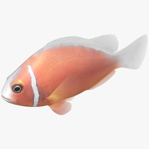 pink skunk clownfish rigged 3D model