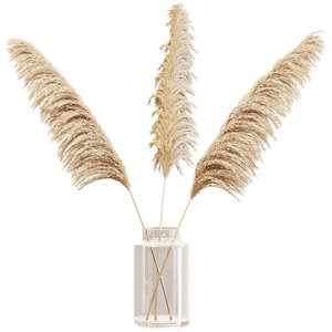 dry branches pampas grass 3D model