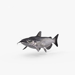 3D catfish fish
