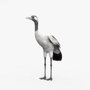 common crane 3D