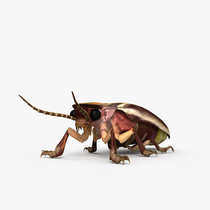 firefly bugs insect model