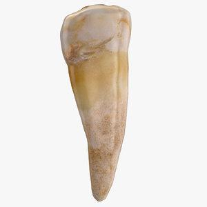 3D model premolar lower jaw 02