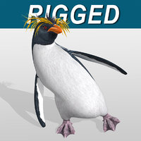 Penguin  Rockhopper