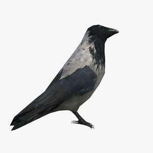 crow animal bird 3D model