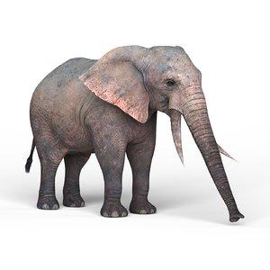 3D elephant materials pbr