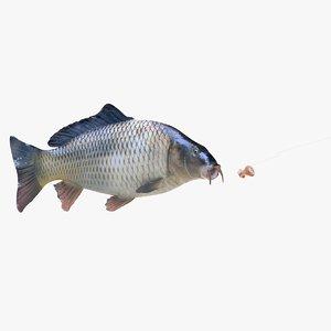 3D common carp