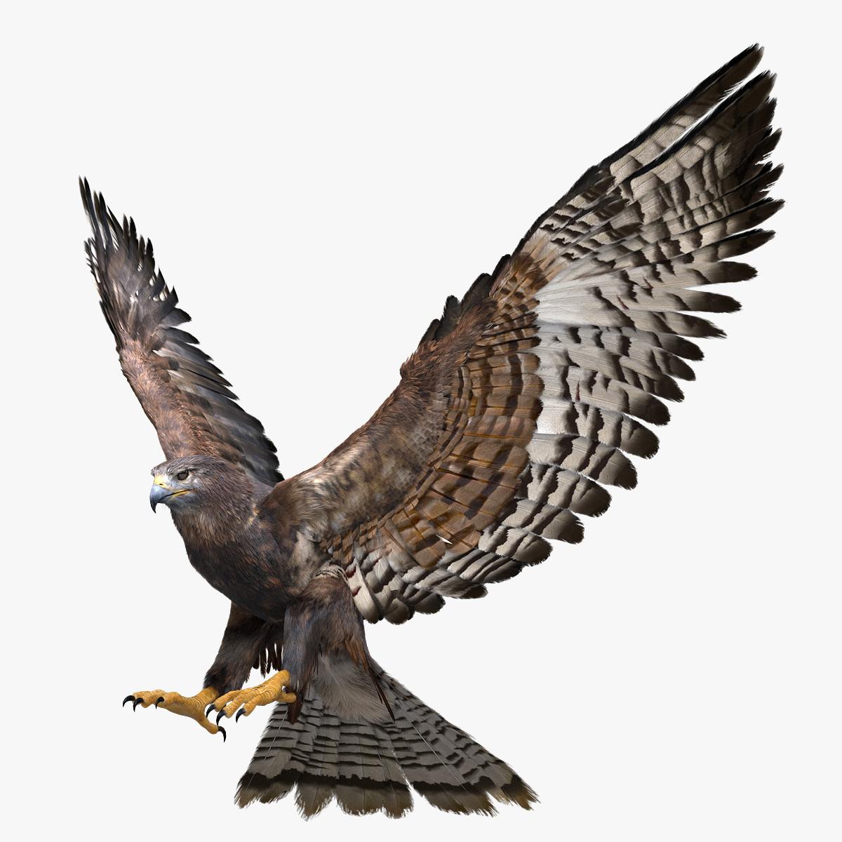 realistic hawk rigged 3D model