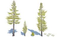 douglas fir trees 3D model