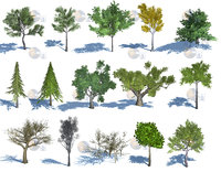 natural forest trees 3D