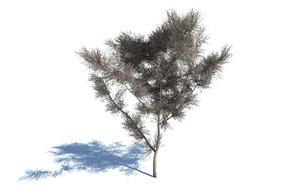 realistic dead tree 3D model