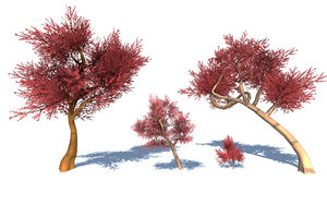 3D stylized colorful trees