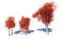 3D model stylized colorful trees forest