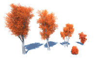 3D stylized colorful leafs tree model