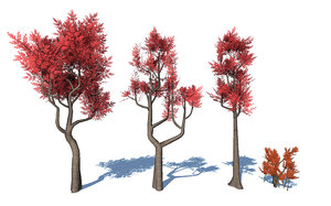 stylized colorful trees 3D model