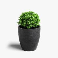 3D boxwood plant