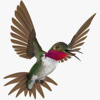 3D broad tailed hummingbird rigged