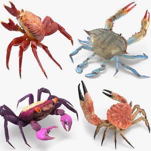 rigged crabs 3D model