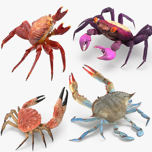 3D rigged crabs