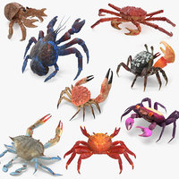 3D model crabs 3 rigged