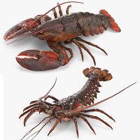 lobster langouste rigged 3D model
