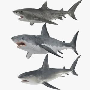 3D model rigged sharks